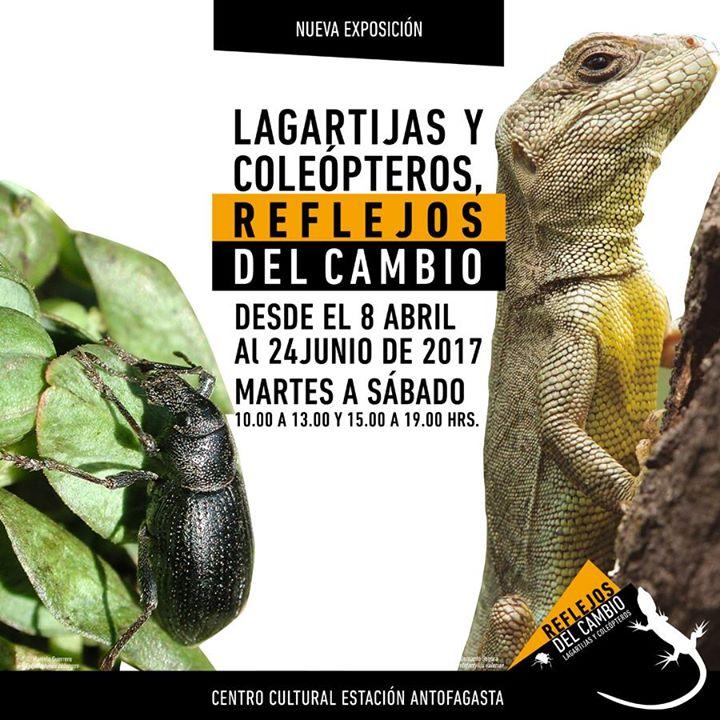 """Entretenida exposición """"Lagartijas y Coleópteros: Reflejos"""